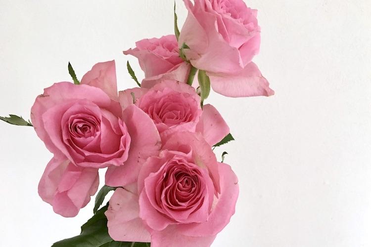 しおれた花を復活させる方法・手順