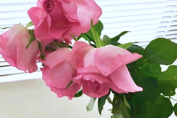 萎れた花を復活させる方法・手順